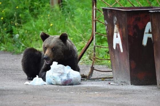 В Якутии охотники застрелили медведя, бродившего во дворе больничного комплекса