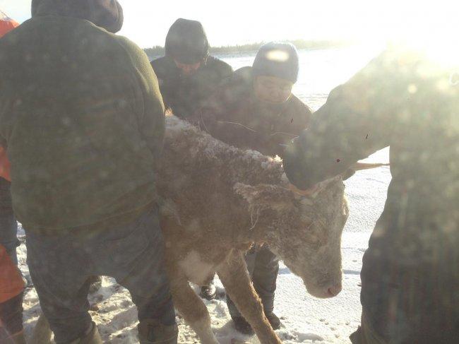 В Якутии спасатели вытащили из плена очередную жертву тонкого льда